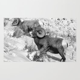 2 Amazing Bighorn Sheep in Black and White by OLena Art for #Society6 Rug