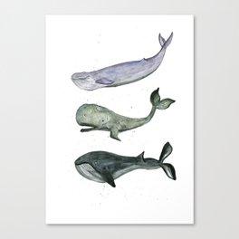 Whales. Canvas Print