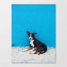 Stray Chihuahua Canvas Print
