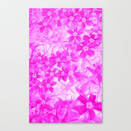 Flower   Flowers   Pink Flox Canvas Print