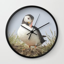 The shy puffin Wall Clock