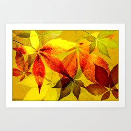 Virginia Creeper autumn colors Art Print