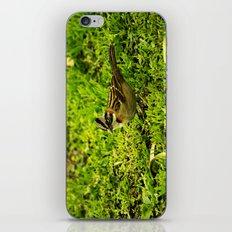 Running Sparrow iPhone & iPod Skin