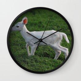 Baby Albino Deer Wall Clock