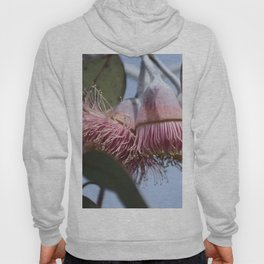 Native Gum tree and pink flower of summer  Hoody
