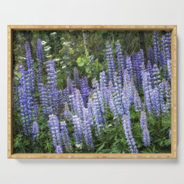Lupins in Blue and Purple Serving Tray