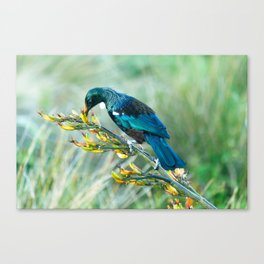 Tui in the wilderness Canvas Print
