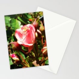 Natural Beauty • Point Defiance Rose Gardens • Tacoma, WA Stationery Cards