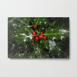 Holly in Scotland Metal Print