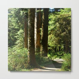 Walkway in Hoh Rainforest Metal Print