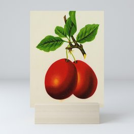 garden 009 saratoga  plum7 Mini Art Print