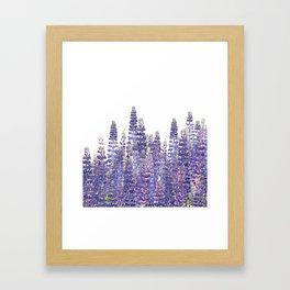 Just Lupine Framed Art Print