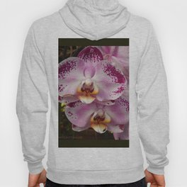 Pink Orchid Blossom from Mexico Hoody