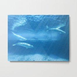 Ocean Blue Beluga Pairs Version 2 Metal Print