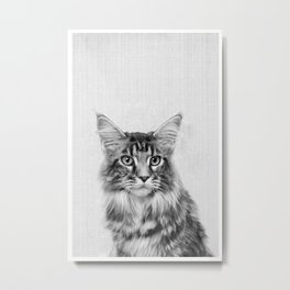 Main Coon Portrait Metal Print
