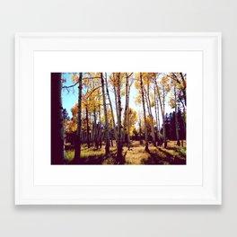 Aspens in the Fall Framed Art Print