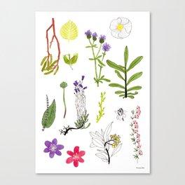 Herbarium #2 Canvas Print