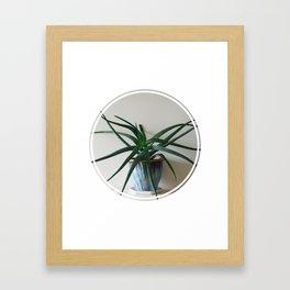 Aloe! Framed Art Print