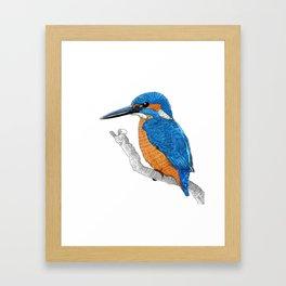 Kingfisher Framed Art Print