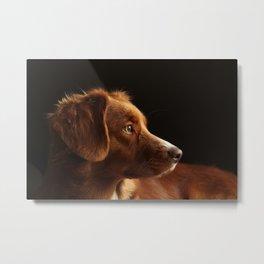 Brown Dog Metal Print