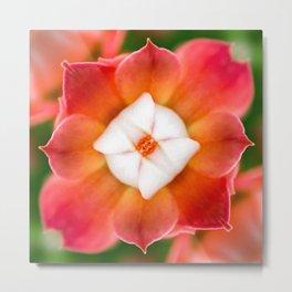 Fresh red Kalanchoe flower surreal shaped symmetrical kaleidoscope front view Metal Print