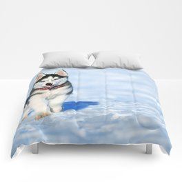 Siberian Husky pup Comforters