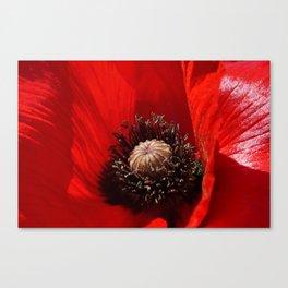 Sunlit Poppy Canvas Print