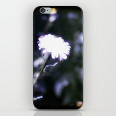 Blue Daisy iPhone & iPod Skin