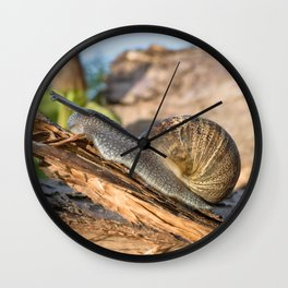 Common British Brown Garden Snail Wall Clock