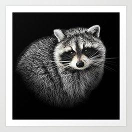 A Gentle Raccoon Art Print
