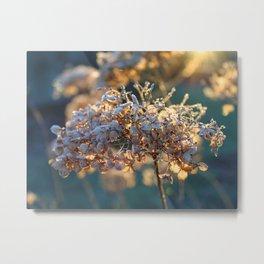 Beautiful Frosty Hydrangea Flower Head Metal Print