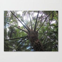 Jardín Botánico de Quito, Siete Canvas Print
