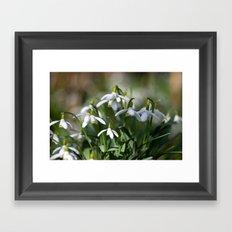 Floral Snowdrops! Framed Art Print