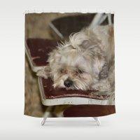 teddy bear Shower Curtains featuring Teddy Bear by IowaShots
