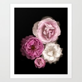 Purple, Pink, and White Roses Art Print