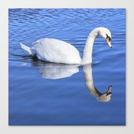 A Swan's Mirror Canvas Print