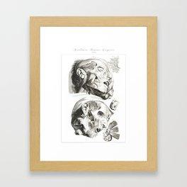 Human Anatomy Art Print HEAD MUSCLE FACE Vintage Anatomy, doctor medical art, Antique Book Plate, Me Framed Art Print