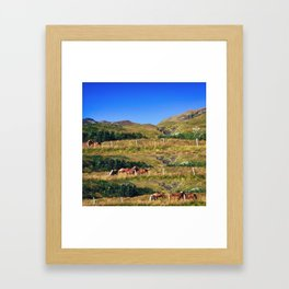 Nuzzling Icelandic Horses on the Snæfellsnes Peninsula Framed Art Print