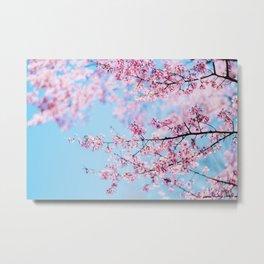 Sakura 06 Metal Print