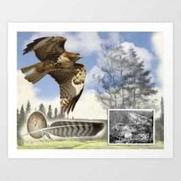 Red Tailed Hawk Montage Art Print