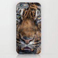 Tiger's Eyes iPhone 6s Slim Case