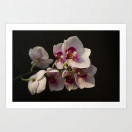Orchid Branch Art Print