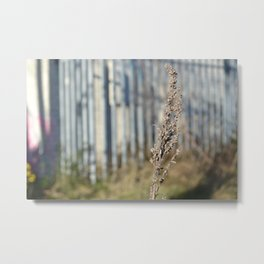 Urban Flower - City Lavender Plant Botanical Floral Photography Metal Print