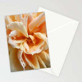 Peach Colored Rose Stationery Cards