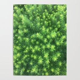 Nature for Days Poster