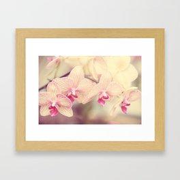 Orchid IV Framed Art Print