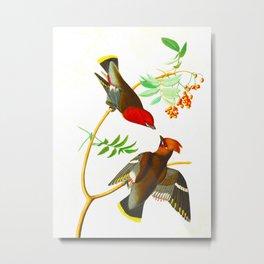 Bohemian Chatterer Bird Metal Print