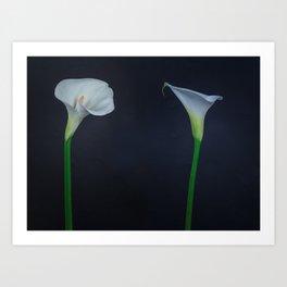 Calla, Arum Lily Art Print