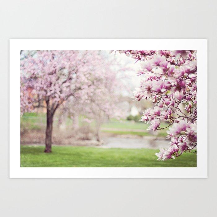 Magnolia Trees Springtime Blossoms Art Print By Marieclay Society6