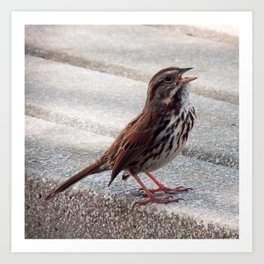 Chirping on a Stone Bench Art Print